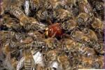 Борьба с нападением пчел