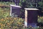 Пчелиное жилище