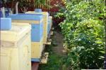 Выбор места для пасеки и размещение ульев