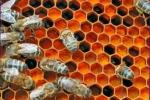 Usando la miel