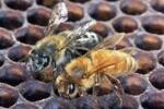 Зимовка пчел в павильоне