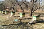 Vuelo artificial temprano de las abejas en el pabellón