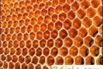Снижение затрат труда на подкормку пчел