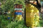 Заготовка кормовых запасов пчел