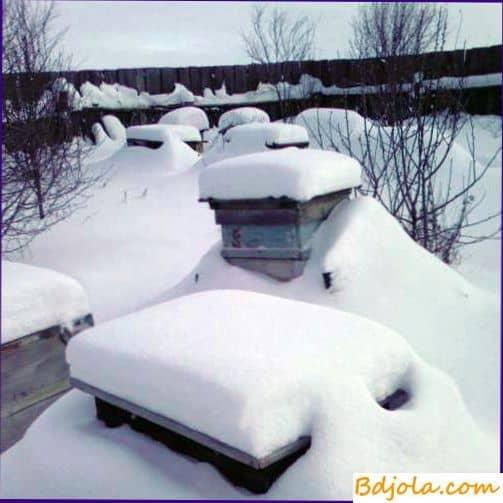 Зимовка на воле в ульях лежаках попарно