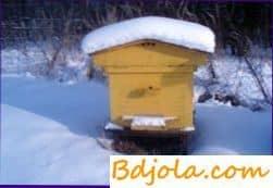 Температурные условия в гнезде пчел