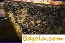 Как работает сигнализация у пчел
