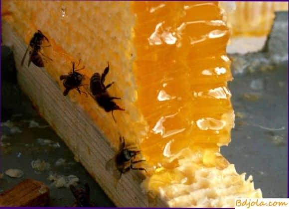 Очитковый мед