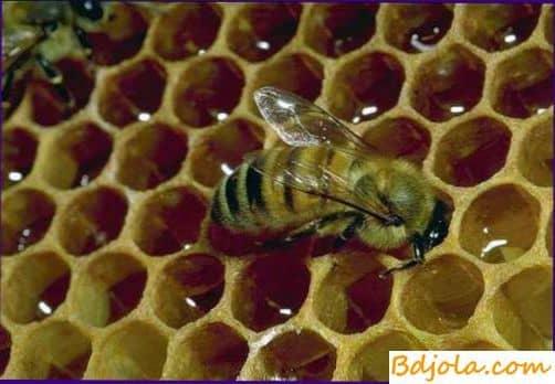 Антибактериальные вещества в пчелином меде