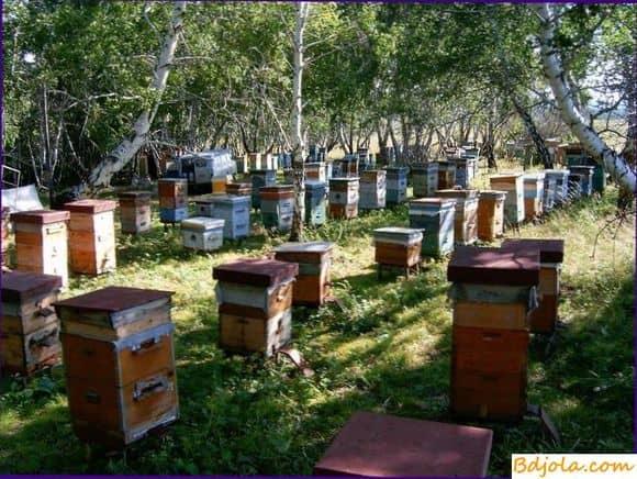 Резедовый мед