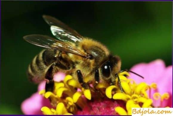 Места лечения укусами пчел