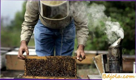 Обследование пчелиных семей