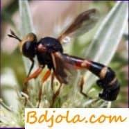 Физоцефалез пчел