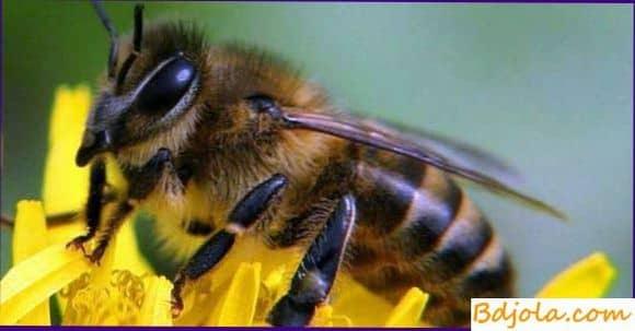 Белковая дистрофия пчел