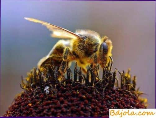 Значение кормовых запасов в гнезде пчел