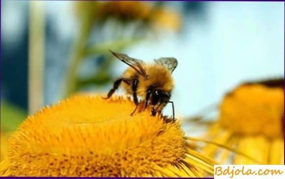 Функции хоботка и медового зобика пчелы