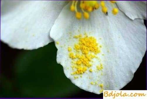Переваримость пыльцы пчелами