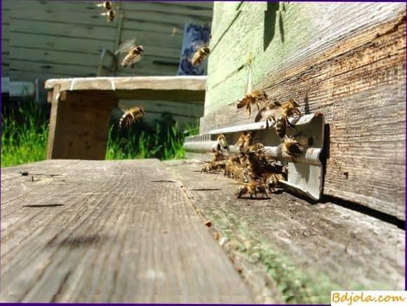 Белковые подкормки пчел