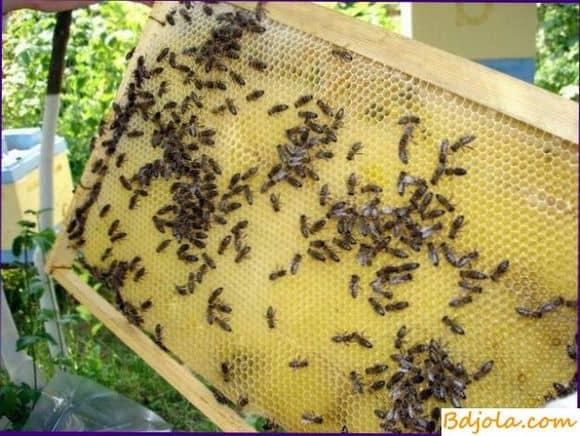 Отбор лучших пчелиных семей