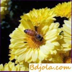 Поддержание пчел в рабочем состоянии