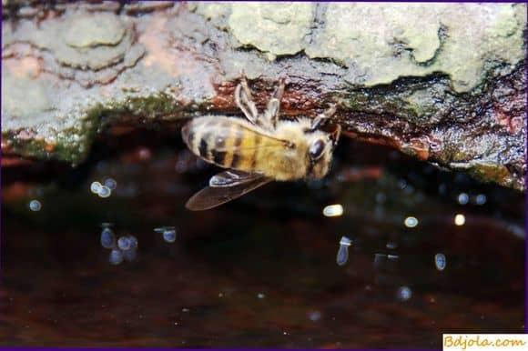 Обеспечение пчел водой