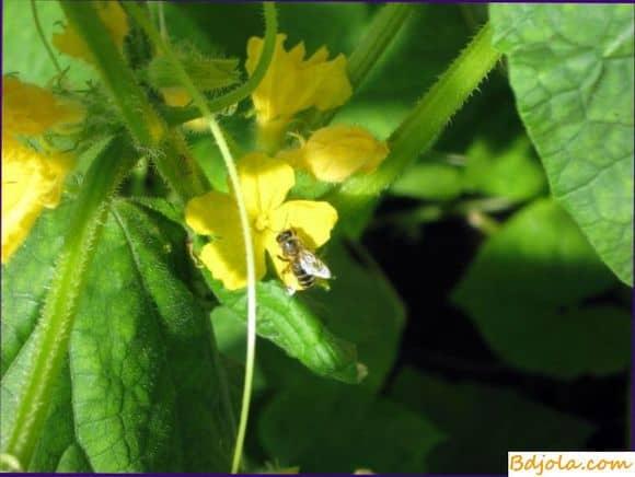 Дрессировка пчел
