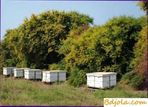 Защита пчел от отравлений