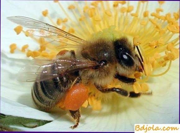 Улучшение кормовой базы для пчел