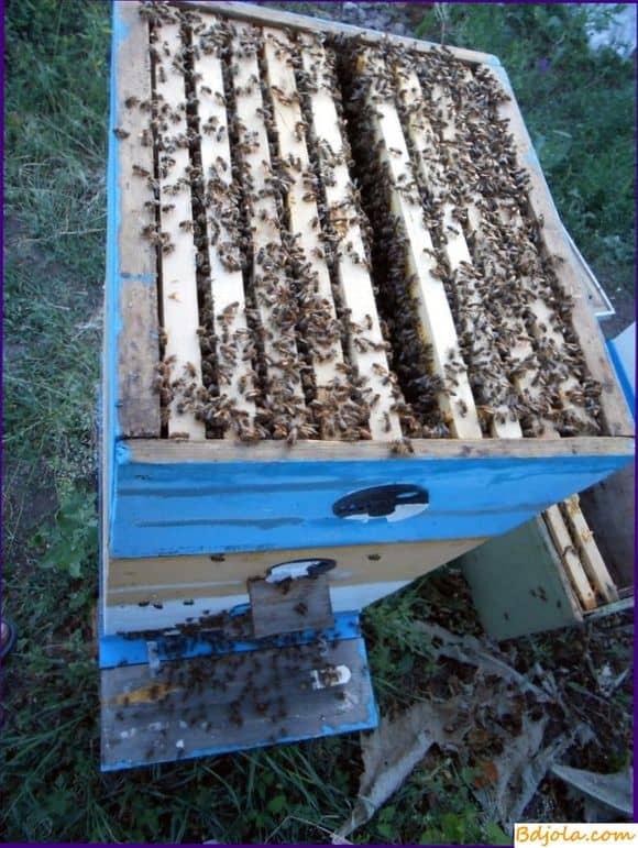 Весенняя ревизия пчелосемей
